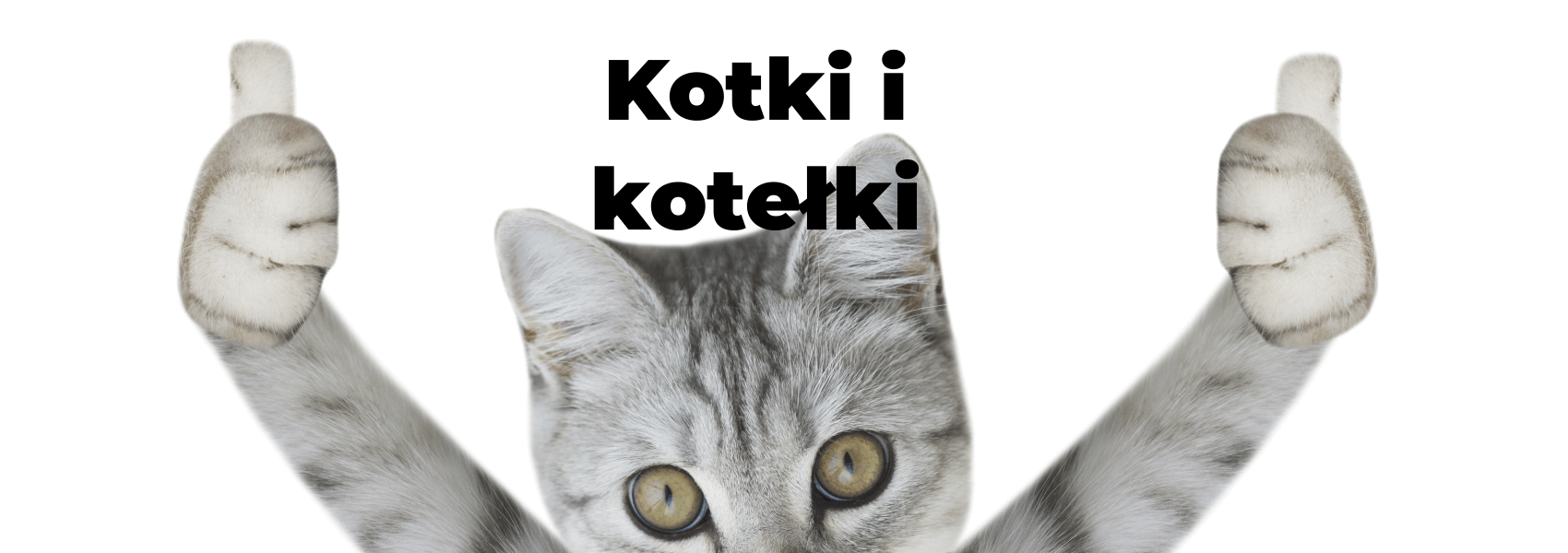 kotki i kotełki