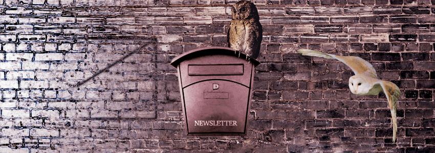 Newsletter a marketing